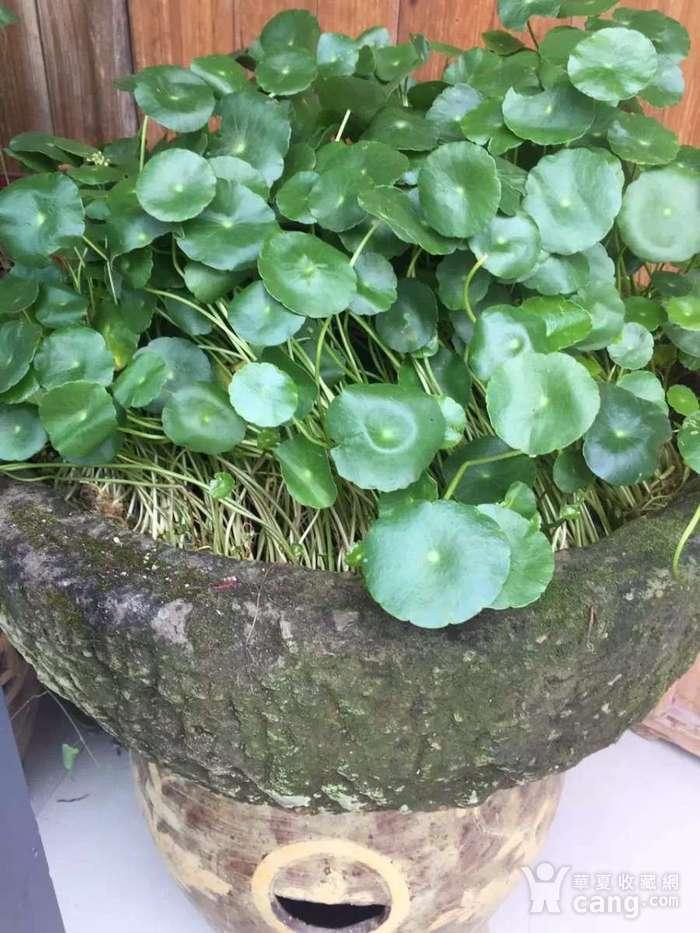清代 石雕盆图6