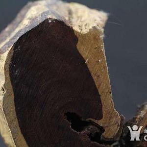 金牌  正宗印度 金星小叶紫檀 原木