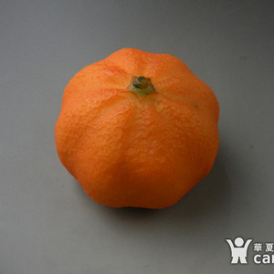 【联盟】趣味品收藏-栩栩如生 甜蜜橘