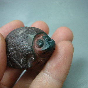 苏工三色阿拉善,龟龟