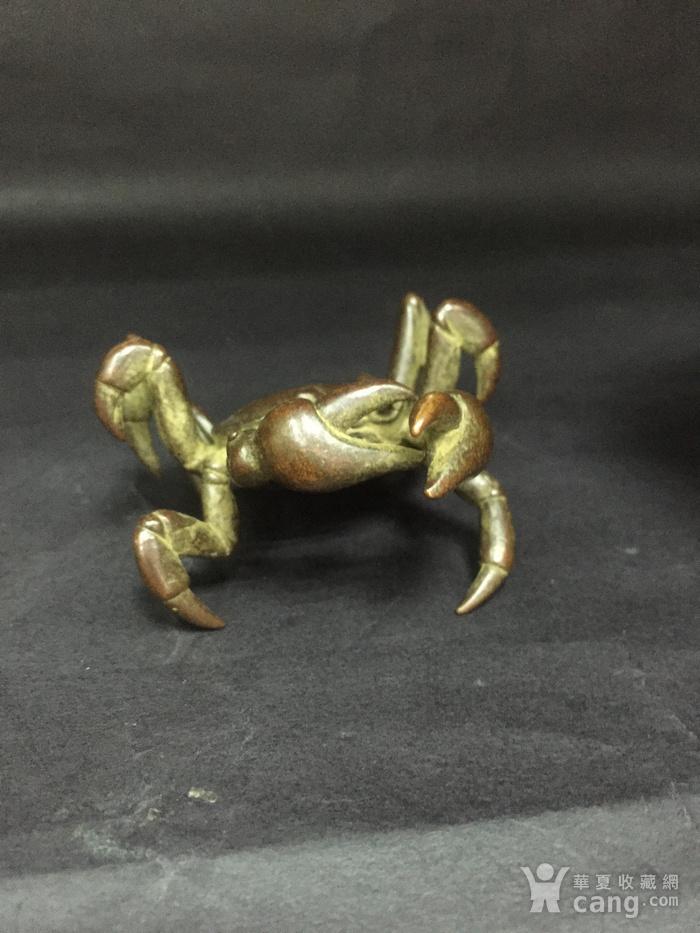 八方来财螃蟹图7