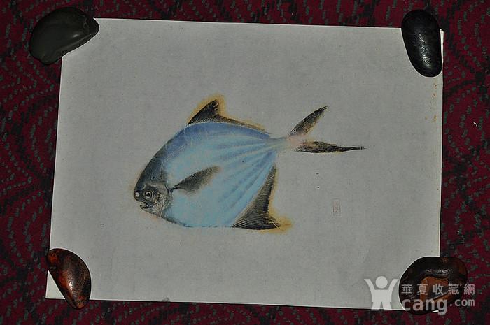 日本鱼拓图图8