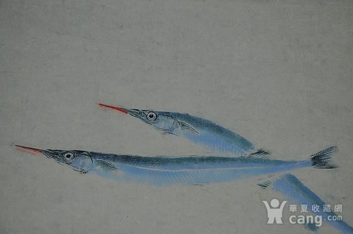 日本鱼拓图图6