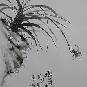 联盟 职业画家张国顺国画作品幽兰飘香
