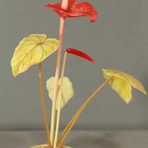 珍贵加彩盆景花 一束莲