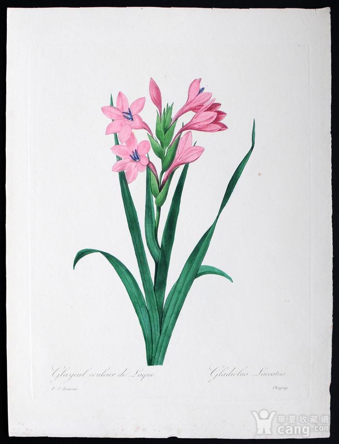 18世纪艺术巨匠雷杜德《花卉圣经》铜版画  喇叭百合图1