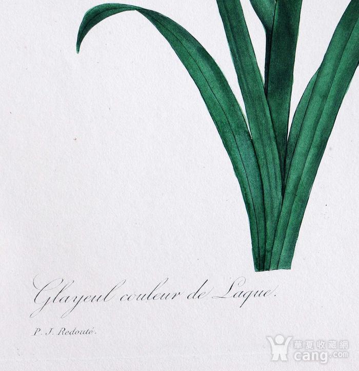 18世纪艺术巨匠雷杜德《花卉圣经》铜版画  喇叭百合图3