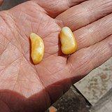 和田黄沁白籽两枚1