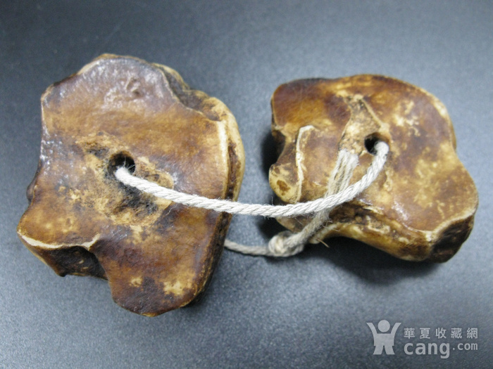 老猫骨 万年保真图6