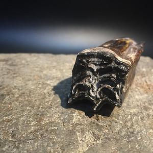 冰河时期史前野马臼齿化石