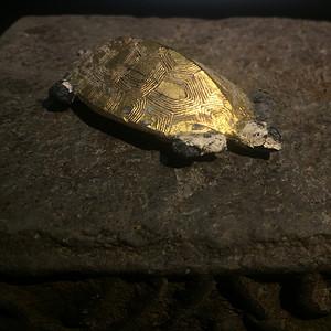 回流金龟老墨
