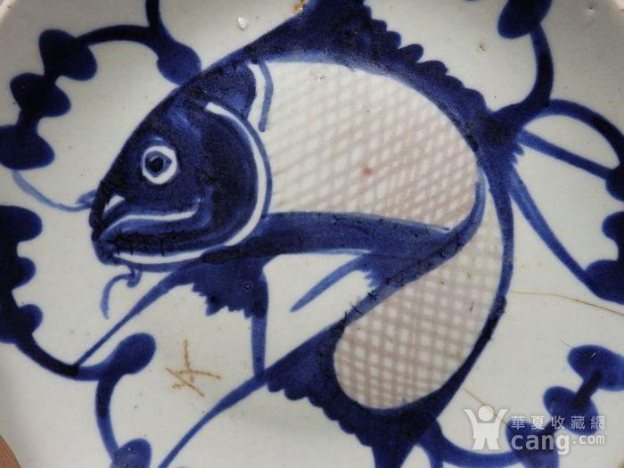 清代青花釉里红鲤鱼盘图2