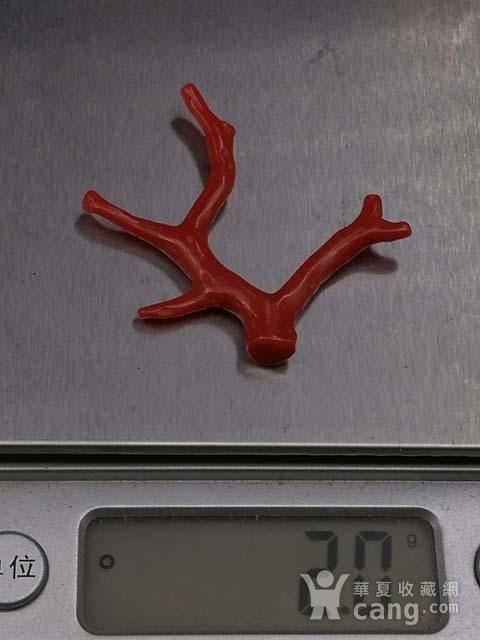 天然日本阿卡珊瑚随形枝A12图12