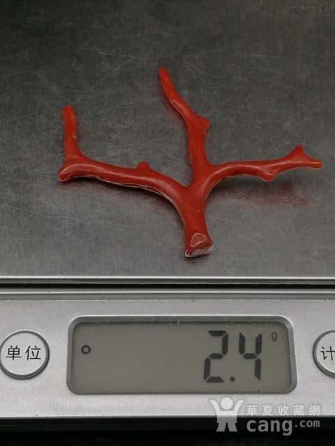 天然日本阿卡珊瑚随形枝H16图12