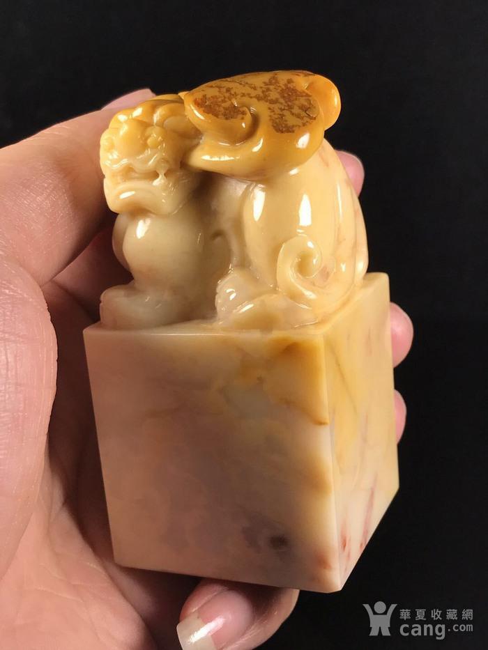台湾回流 精品寿山石老性掘性脱蛋三彩黄花芙蓉古兽大雕钮!图7