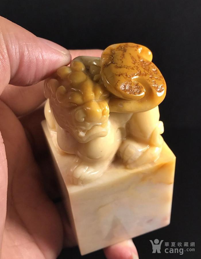 台湾回流 精品寿山石老性掘性脱蛋三彩黄花芙蓉古兽大雕钮!图8