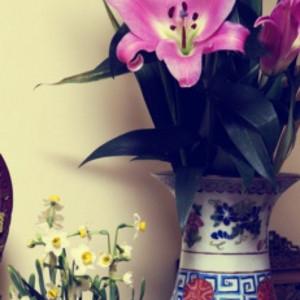 清代40cm同治饕餮回纹粉彩大花觚