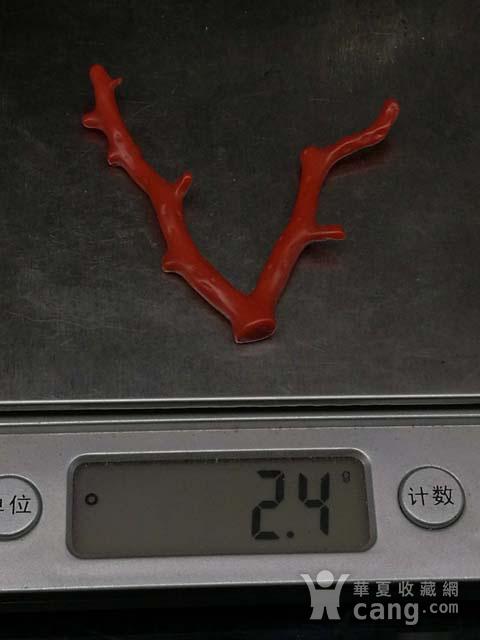 天然日本阿卡shanhu随形枝4图12