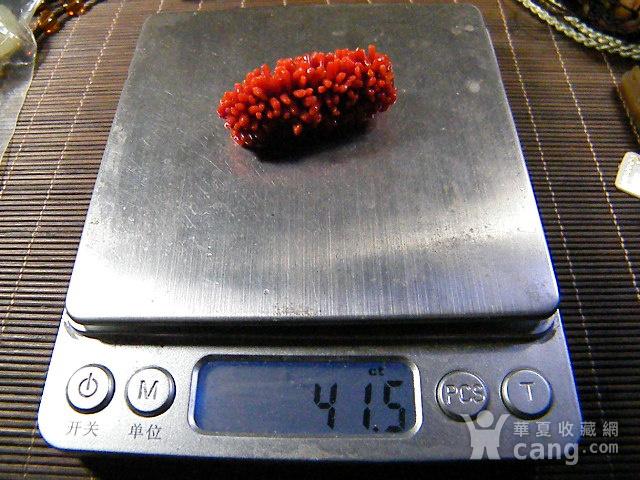 天然红珊瑚毛毛虫41.5克拉图5