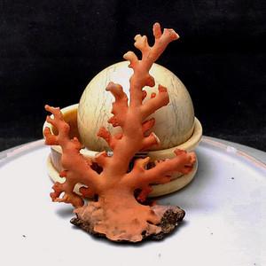 重器 34.27克珊瑚树
