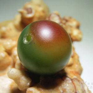 民国时期 上等 戈壁 菠菜绿 鸿运当头 双色玛瑙 珠