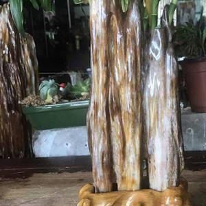 缅甸精品冰种树化玉摆缅甸