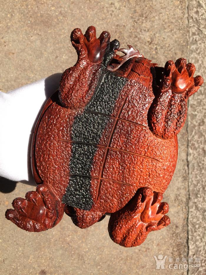 联盟 精品印度小叶紫檀 龙龟 摆件图9
