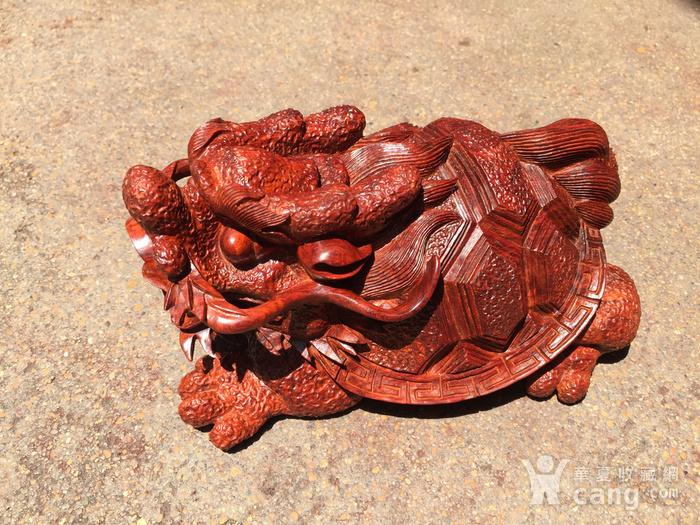 联盟 精品印度小叶紫檀 龙龟 摆件图7