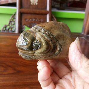 精品天然奇 热带鱼摆件