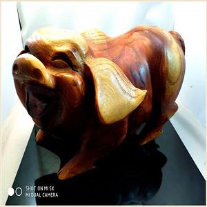 现代黄扬木大肥猪