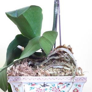 清代花开富贵粉彩六方水仙盆