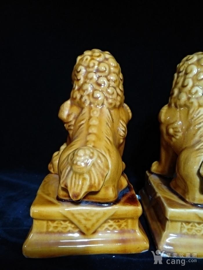 回流之黄狮子一对图6