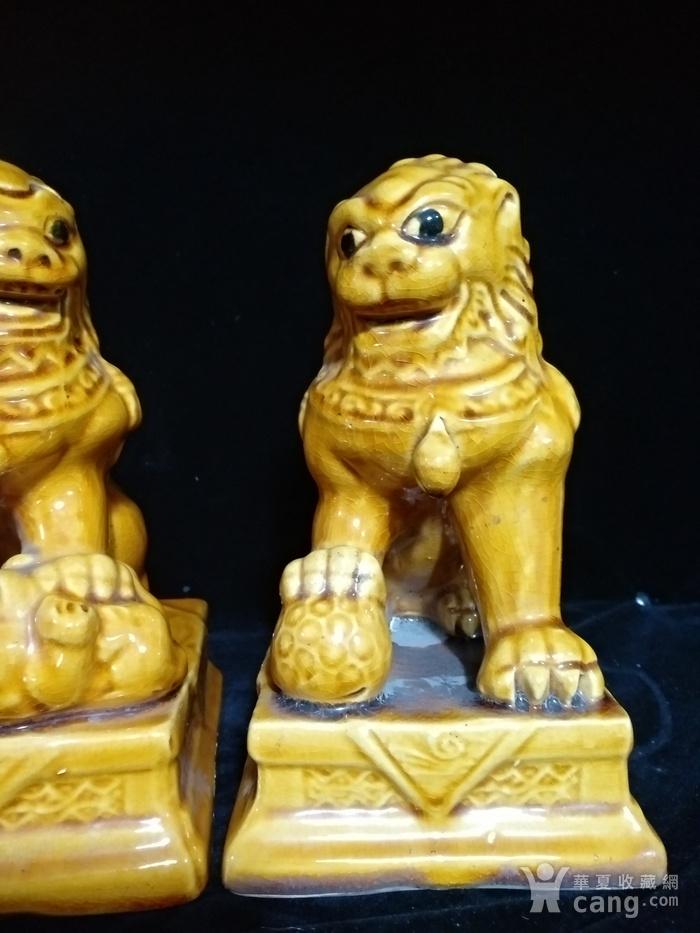 回流之黄狮子一对图7