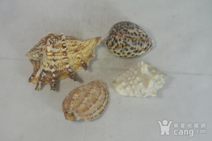 深海螺贝壳四个图1