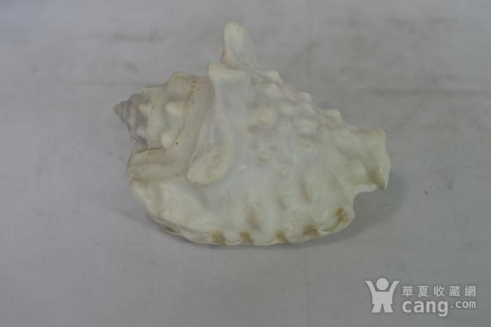 深海螺贝壳四个图5