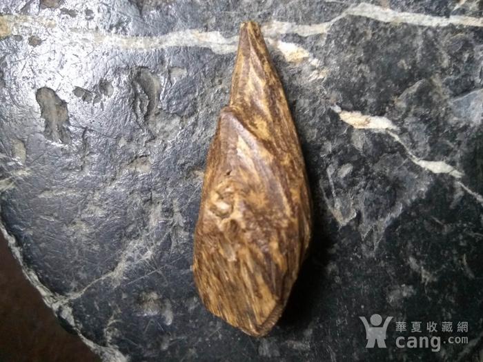 珍贵 越南芽庄虎斑黑油香图1