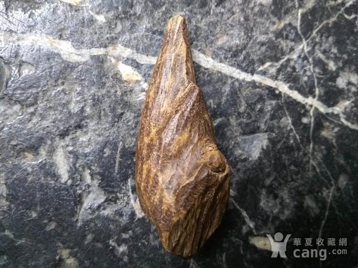 珍贵 越南芽庄虎斑黑油香图2