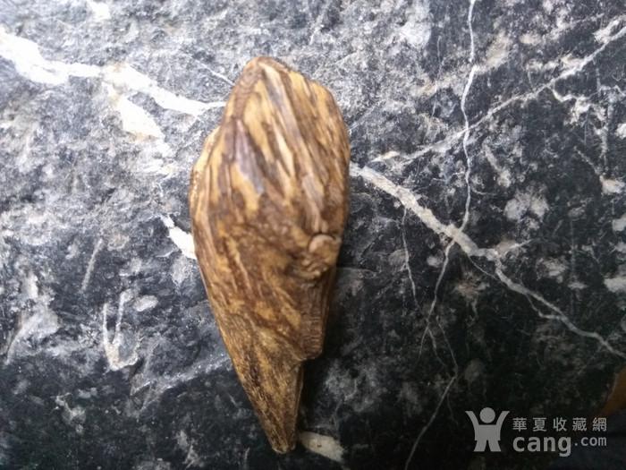 珍贵 越南芽庄虎斑黑油香图6