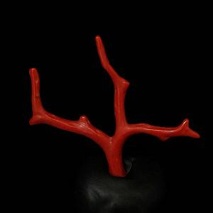 天然日本阿卡珊瑚随形枝H16