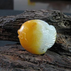 黄沁籽 鱼
