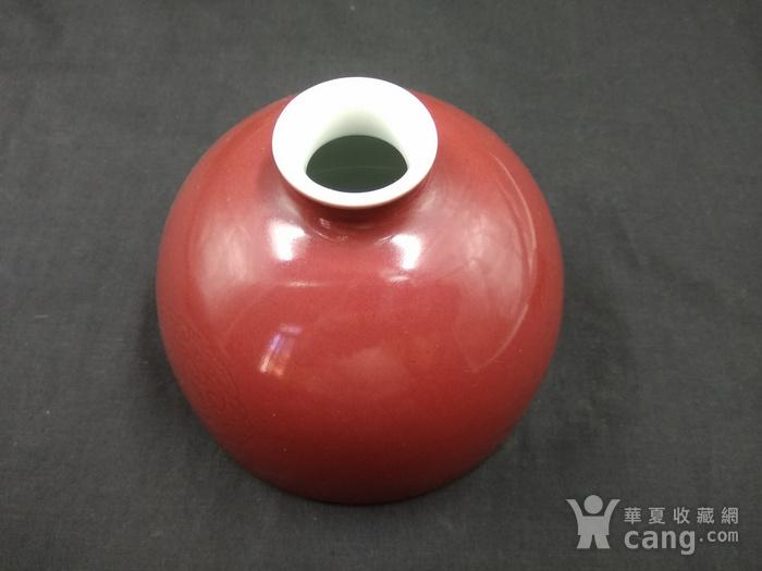 收藏级 团龙纹豇豆红太白尊图3