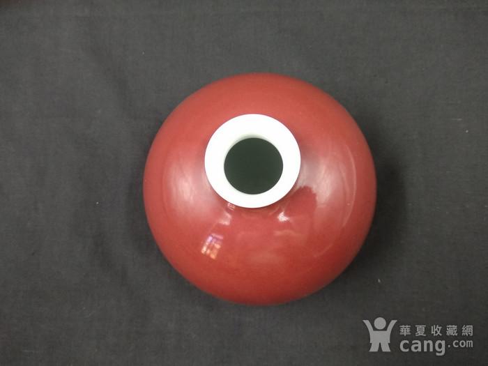 收藏级 团龙纹豇豆红太白尊图5