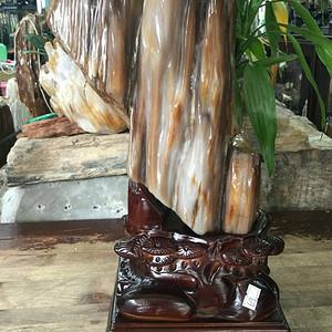 缅甸精品冰种树化玉摆件 配红木座