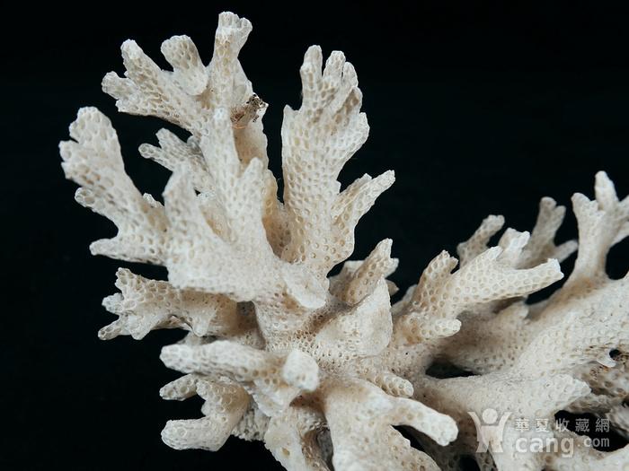 清代白珊瑚摆件图5